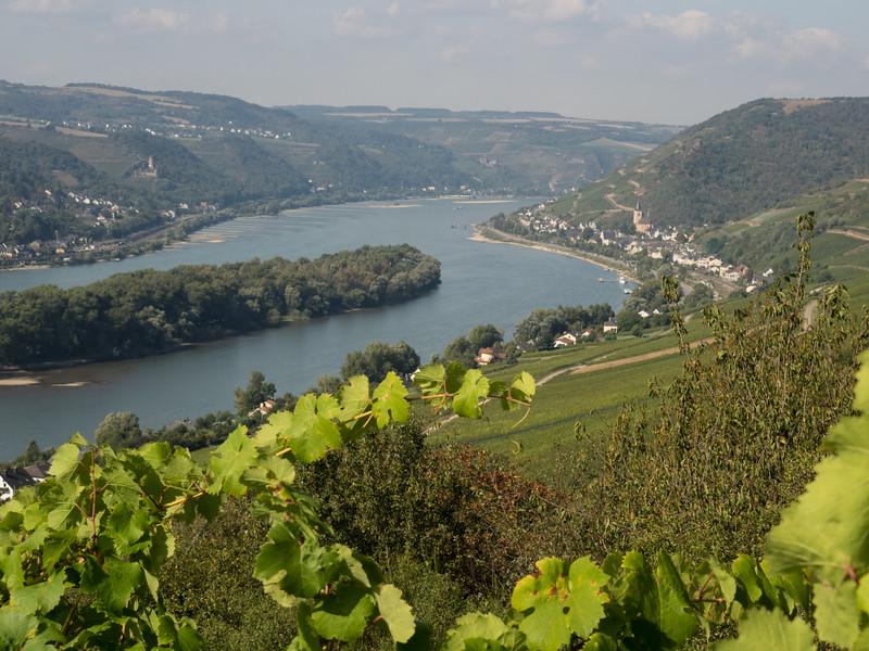Rheingau 09/2016