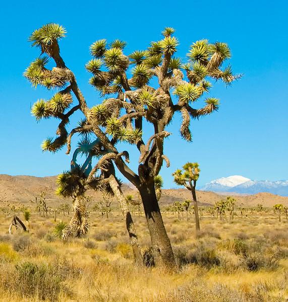 Joshua Tree_Landscapes-4.jpg