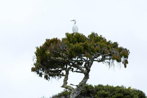 20170406 Birds at Stewart Island _JM_3859 a.jpg
