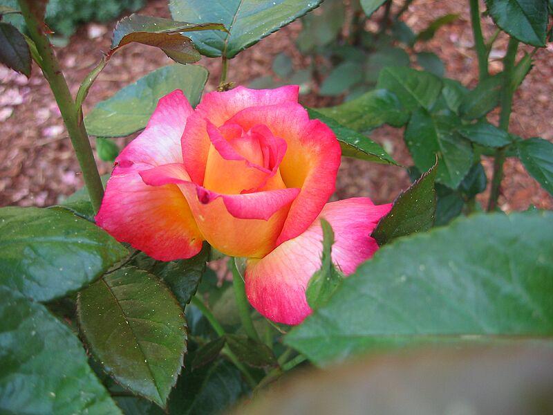 garden-2002-06-0067_std.jpg