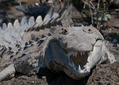 Costa Rica 2012 Reptiles