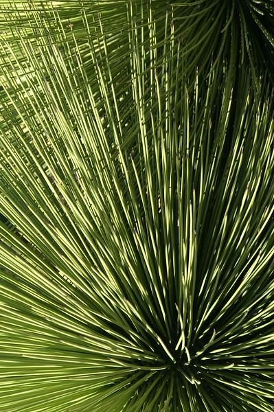 at the Jardin Botanical, San Miguel de Allende, Mexico. 2007