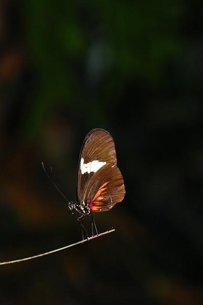 orangewhitebrown.jpg