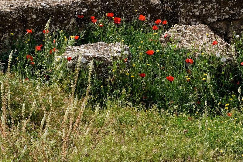 Greek Poppies.jpg