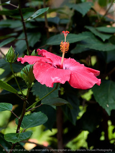 015-flower-dsm-05jul12-001-7158