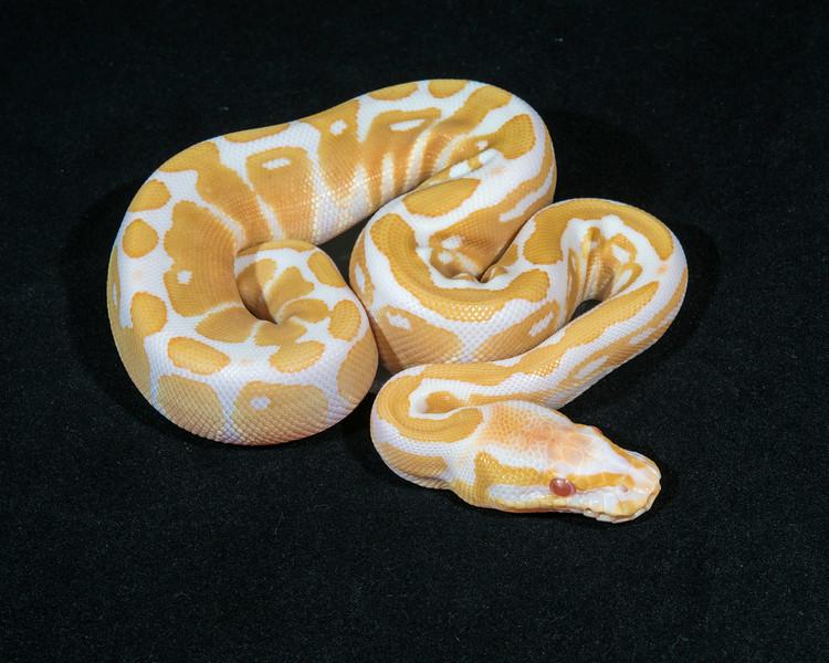 Albino F0114, $250, sold, Scott