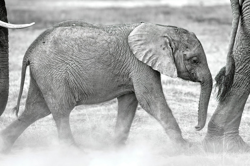 Kenya 9848.jpg