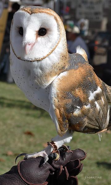 RESCUE OWL 10-26-2014.psd