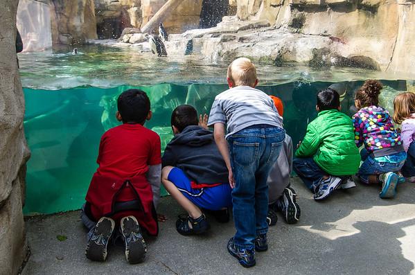 Kindergarten Zoo Trip