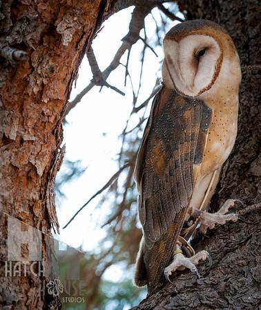 Hawk Quest 2015