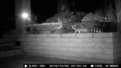 House Camera Traps