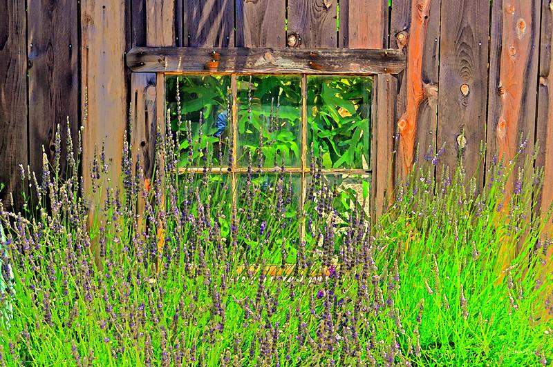 lower story window 1-10-2011.jpg