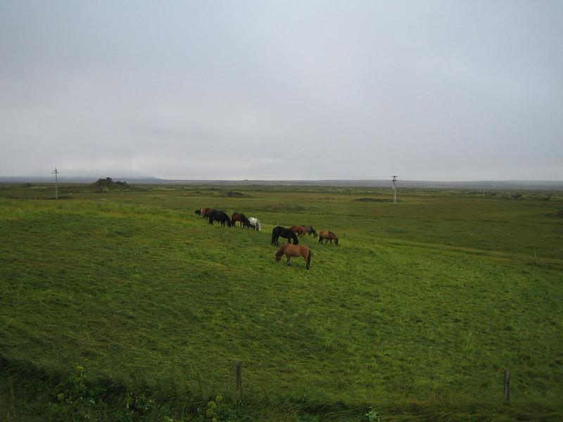 1905 - Icelandic horses.jpg