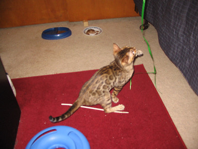 """Jambi""  The Second Bengal"