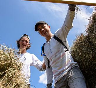 Last Hay