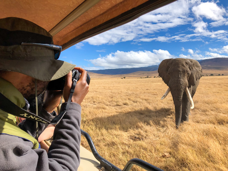 Elephant in the Ngorongoro Crater