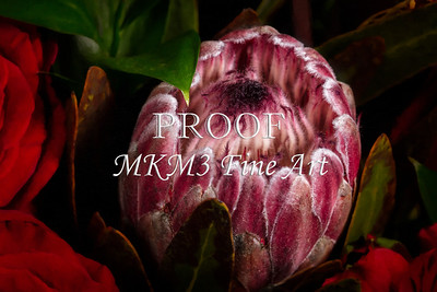 Flower Bloom Fine Art Photographs