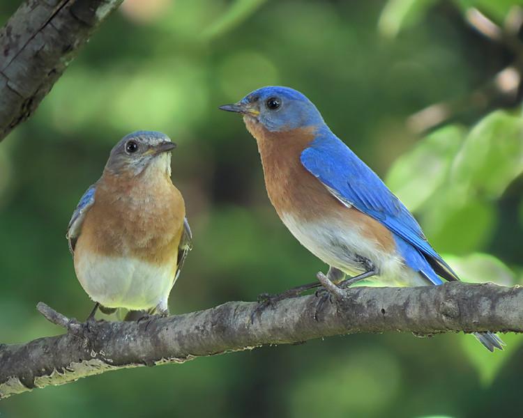 sx50_bluebird_bit_Bert_Hanna_171.jpg