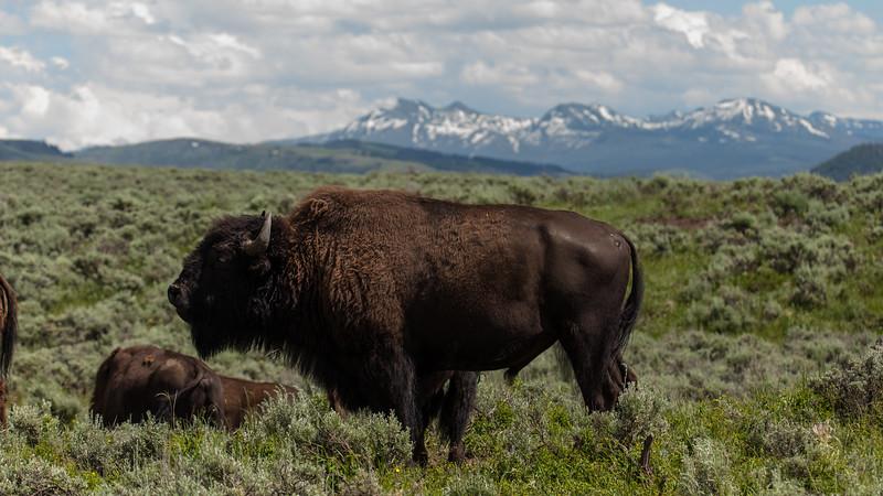 Yellowstone Misc-129.jpg