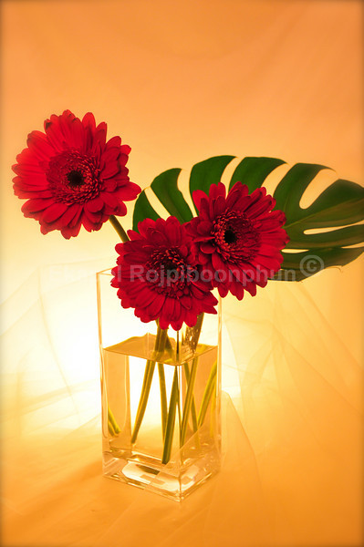 Wedding Bouquet Photoshoot