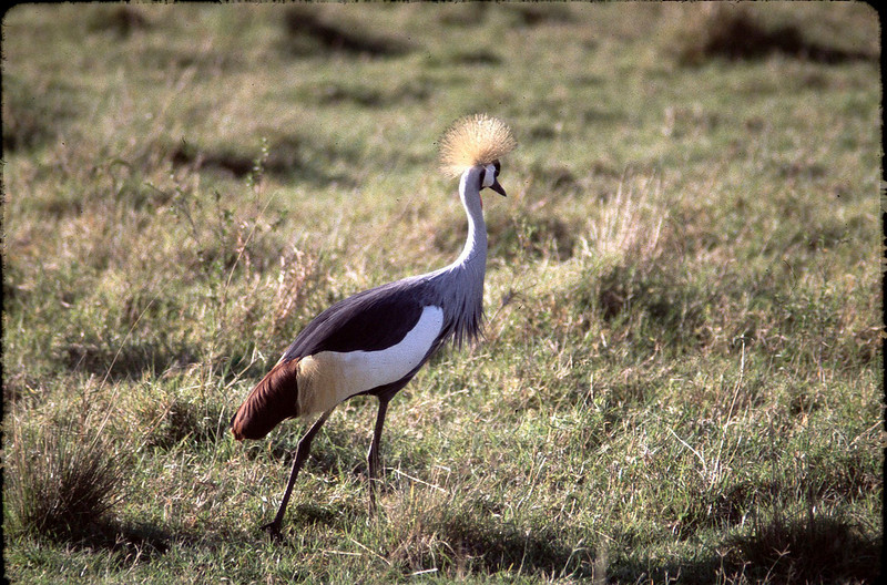 Kenya2_034.jpg