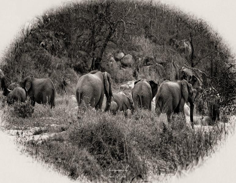 AFRICA Elephant Family   3 copy copy.jpg