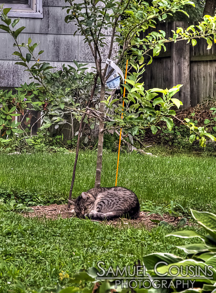 Cat sleeping on the lawn