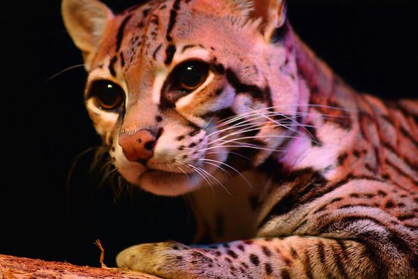 Rosamond Gifford Zoo Life