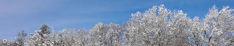Newbridge in the snow