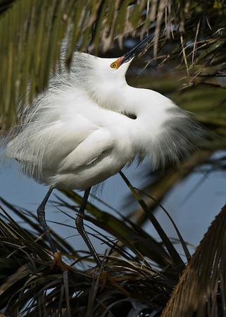 Baylands Birds 2008.04
