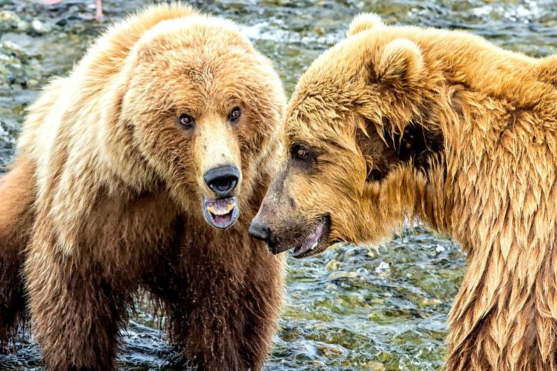 Alaska_2013_FH0T8451-2.jpg
