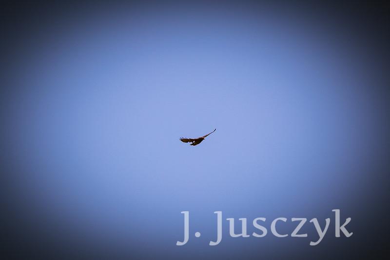 Jusczyk2021-8206.jpg
