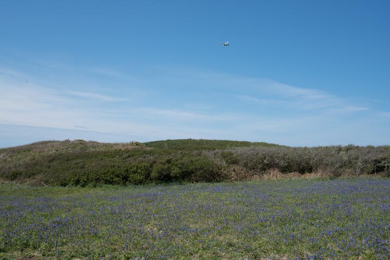 Pleinmont, Blue Bells