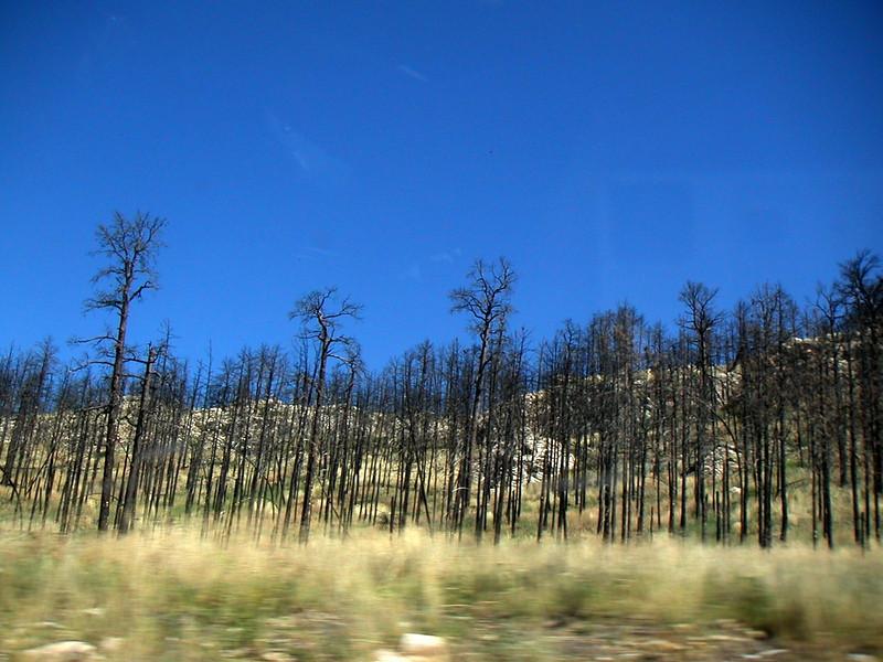 34 Burnt Trees.jpg