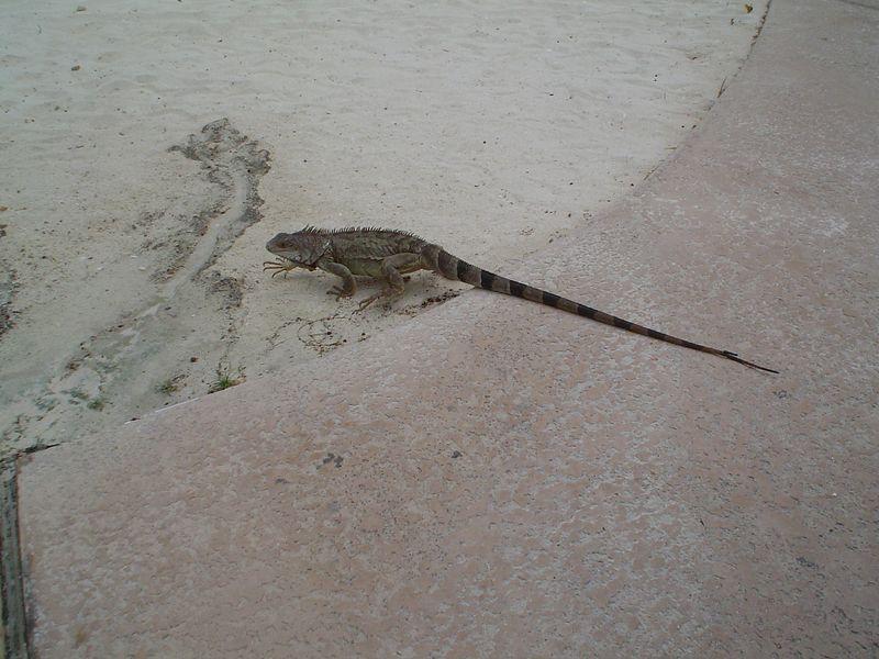 Aruba 2005 020.jpg