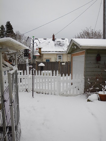 Snow Feb 9th 2014