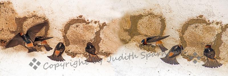 And So It Begins... - Judith Sparhawk