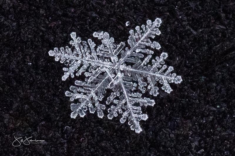 snowflakes-1202.jpg