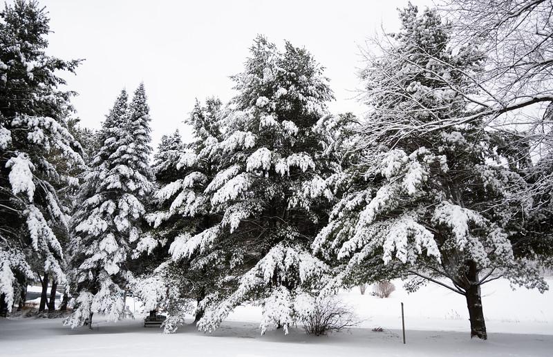 02-04-2021-winter-2.jpg