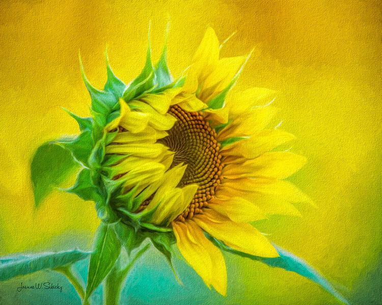 QN9A2810-sunflower stackedLOGO twoimagesIMPRESSIONSPRINT.jpg
