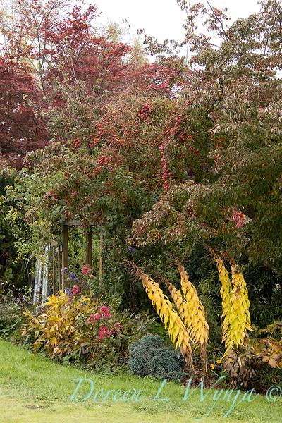 Cornus kousa bearing fruit - fall landscape_2244.jpg