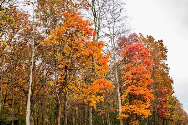 One Last Fall Hurrah! 10-23-20 (D850)