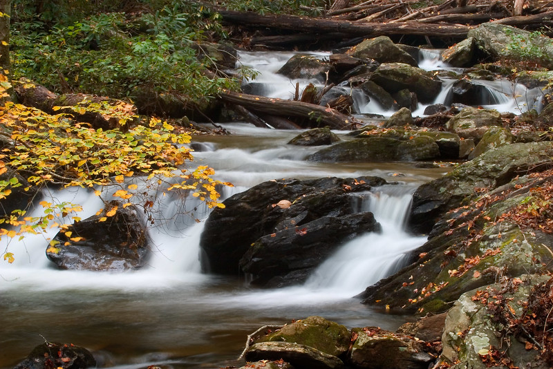 smith creek 5859.jpg