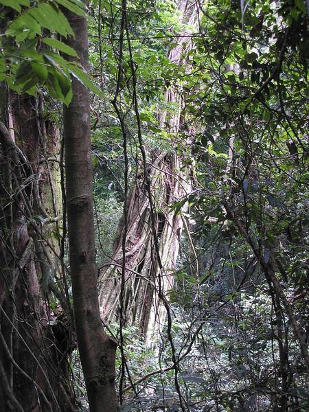 Downed Tree at Natural Bridge