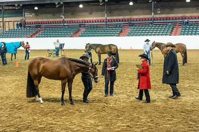 Mid-South Quarter Horse Show - March 2 - 2019