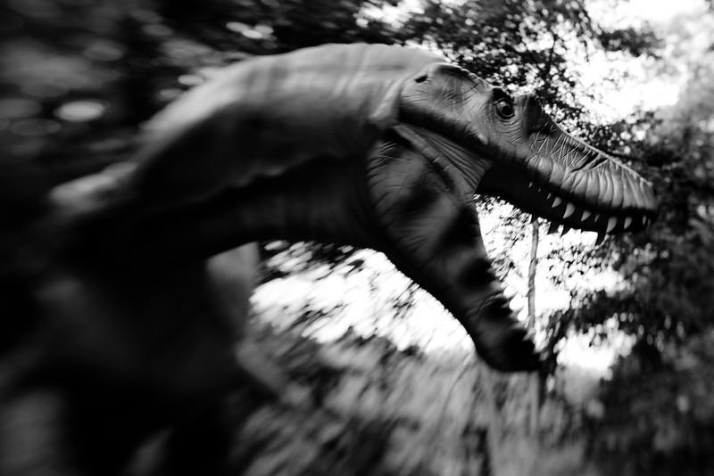 more_albertosaurus.jpg