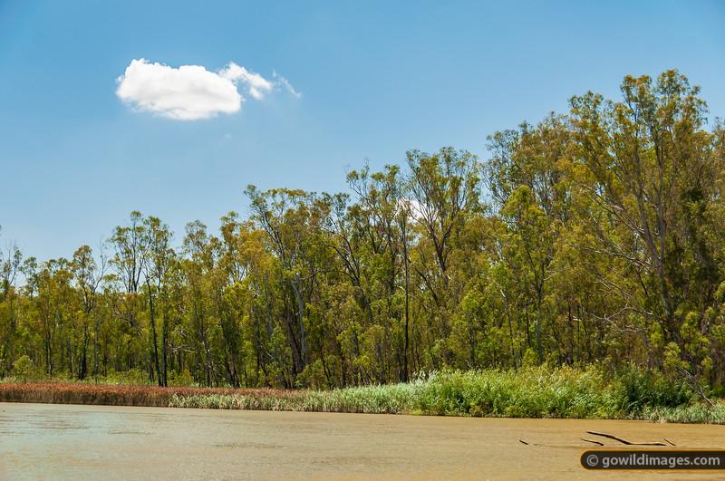 Murray River in Barmah NP