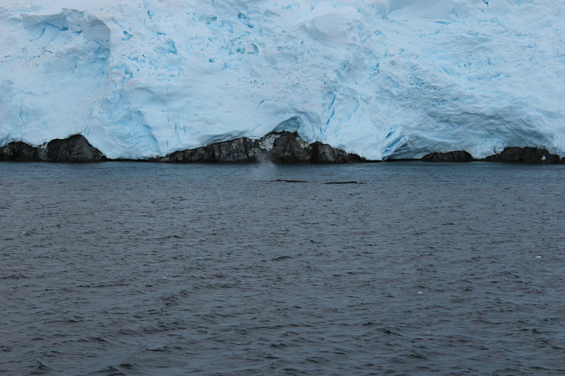 Antarctica 150.JPG