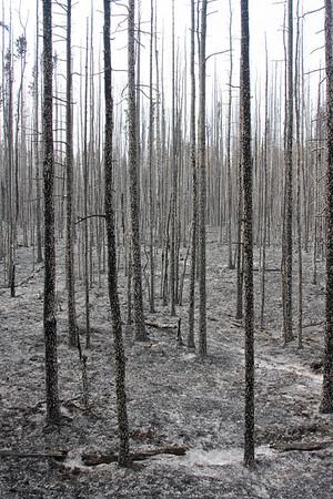Eagle Trail Fire, Tok, AK