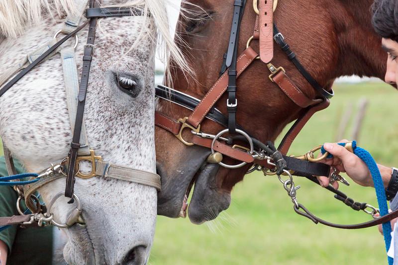 SIRE Ride-a-thon 2013-6011.jpg